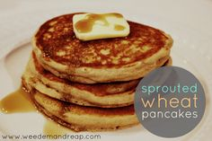 Easy Sprouted Wheat Pancakes - After Monday's post about how insanely easy it is to sprout your own wheat , I decided to share a simple, easy sprouted wheat recipe! At our house, we only eat