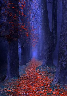 """ The red carpet "" - "" Walk along the red carpet and listen to the applause of the leaves """