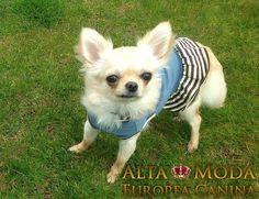 Todas las personas que tienen una perrita de raza pequeña y la visten, quieren llevarla a la moda, a la ultima en cuanto a ropa para perros se refiere.