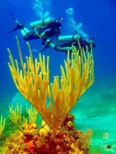 El submaninismo es el buceo en el mar, mientras que el término buceo se refiere a la inmersión en cualquier tipo de agua: mar, lago, piscina, etc.