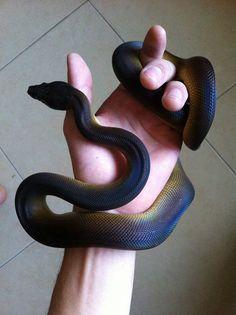 Gorgeous snake
