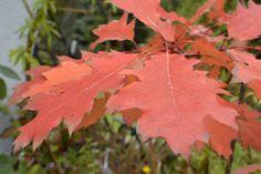 Jesień we Floraj