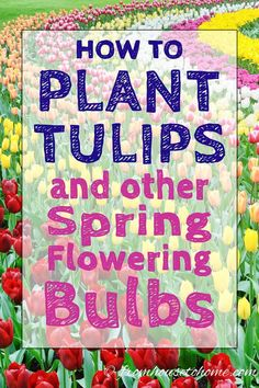 Gardening With Containers These tips for how to plant bulbs in the fall are awesome! I can wait to have a beautiful spring garden with tulips and daffodils. Click through to get lots of ideas for different bulb varieties, too. When To Plant Tulips, Planting Tulips, Tulips Garden, Garden Bulbs, Shade Garden, Daffodils, Fruit Garden, How To Grow Tulips, How To Plant Bulbs