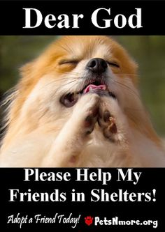 animal, dog, cat, pet, animal, inspiring quotes for animal lovers, petsnmore.org, shelters,