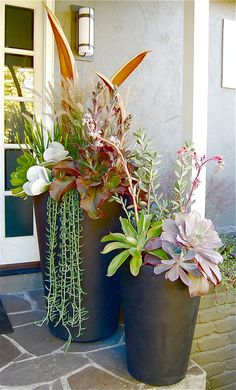 "Flourish Succulents: OUTDOOR PLANTERS (OTHER STYLES AVAILABLE) 30""w x74""h – $725.  /  18""w x 45""h  -  $325. *Now offering custom outdoor planters! Container Plants, Container Gardening, Outdoor Planters, Planter Pots, Flourish, Fundraising, Succulents, Driftwood, Branches"