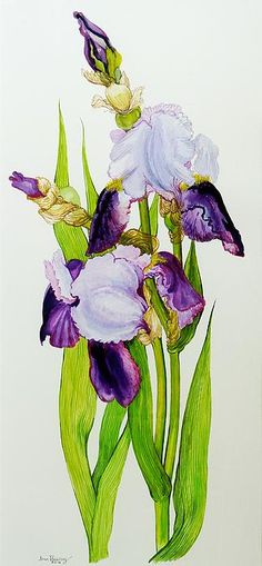 """""""Mauve And Purple Irises With Two Buds"""" by Joan Thewsey"""