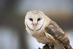 Blue Bloods, Nature Photography, Bird, Animals, Animales, Animaux, Birds, Nature Pictures, Animal