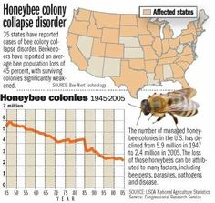 Colony Collapse Disorder Honey Bee | Colony Collapse Disorder-Management Plan
