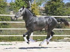 http://www.yeguadalaperla.us/#!stallions/ckqh