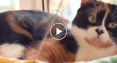 Oito Ideias Simples e Práticas Que Irão Alegrar Qualquer Gato http://www.funco.biz/oito-ideias-simples-praticas-irao-alegrar-gato/