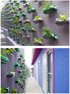 garden wall made of recycled soda bottles. what a fun idea!