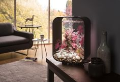BiOrb LIFE 15 | biOrb Lifestyle Aquariums - Water Garden UK biOrb are highly versatile and low maintenance indoor aquariums. Love the subtle pink highlights in this one!