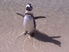 Boulder Beach, Cape Town, Bouldering, Penguins, South Africa, Animals, Life, Animales, Animaux