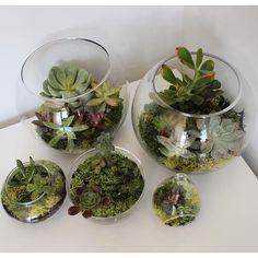 【tinyworlds_sf】さんのInstagramをピンしています。 《🌿💌 tinyworlds.sf@gmail.com . . . #terrarium #terrariums #terrario #terrariumlove #succulent #succulove #succulents #succulentlove #cactus #cactuslover #botanical #green #love #beautiful #nature #naturelovers #decoration #handmade #plants #plantsofinstagram #kaktüs #sanfrancisco #tinyworlds #суккуленты #кактус #テラリウム #succulenten #多肉植物 #sukulenty #kaktus》