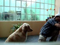 Como enseñar al Perro a sentarse con Entrenamiento Clicker - YouTube