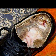 I think he needs a bigger shoe.