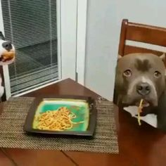 Funny Animal Memes, Funny Animal Pictures, Funny Dogs, Cute Little Animals, Cute Funny Animals, Cute Dogs And Puppies, I Love Dogs, Doggies, Cute Animal Videos