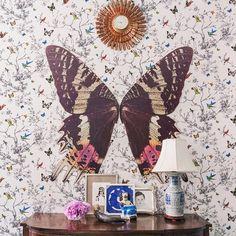 Feeling fluttery #butterfly #wallpaper