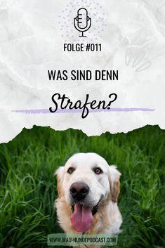 Positive Verstärkung, Adoption, Tricks, Dogs, Community, Dog Training School, Dog Accessories, Pooch Workout, Interesting Facts