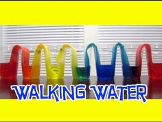 Walking water experiment #cool #awesome #science #experiment #colors Watch it here: http://buff.ly/1N9QOA4