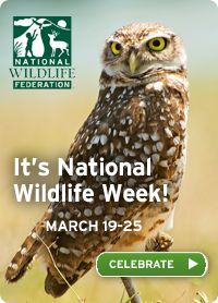 Want to spread the word? add a badge to your profile or website to help us celebrate! #wildlifeweek