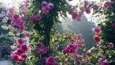 Climbing Flowers, Hanging Flowers, Rose Care, Plant Guide, Poems Beautiful, Root System, Growing Roses, Organic Fertilizer, Deep