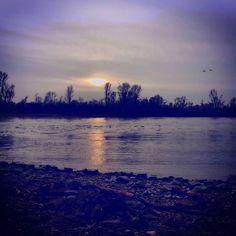 #rhein #strand #river #water #nature #natureart #motherearth #landscape #tree #artnouveau #feeling #sundown #walk #skyporn by katharina_be84
