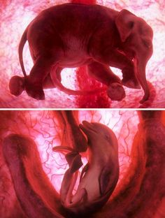 Baby animals in the womb...so neat!!