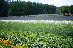 初夏の花畑   by bluegreen405