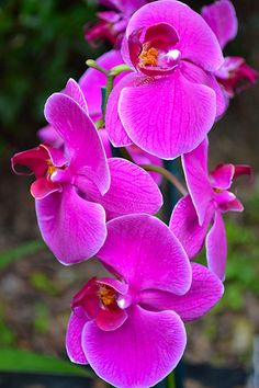 Orchid flower- my fav flower!