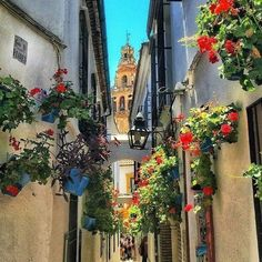 La Calle de las Flores in #Cordoba seems to be #painted in the #colors of the flowers #andalusia #visitspain photo by @dainbarretti by spain