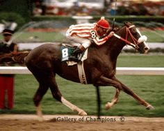 1983 Kentucky Derby Winning Race Horse Sunny's Halo This horse was trained by my Uncle...my grandmother was so proud!