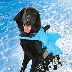 Doggie Shark Swim Vest - Jaws-ify your pet's doggie paddle with the shark swim vest. Yes, how CLEVER! What a brilliant addition to your GoPro in-water photoshoot and the perfect way to keep your dog from doing the Titanic. The full body flotation vest will keep him safe in the water and the attached dorsal fin will keep you entertained. The metal D-ring on the back will also keep your dog in check when it's land-shark time.