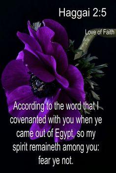 Image result for KJV Haggai verse 6
