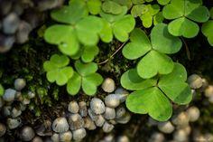 - Bärenschützklamm Plant Fungus, Fungi, Fruit, Plants, Mushrooms, Flora, Plant