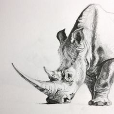 Pencil Drawings Of Girls, Pencil Drawings Of Animals, Animal Sketches, Drawing Sketches, Rhino Tattoo, Rhino Art, A Level Art Sketchbook, Nature Sketch, Character Sketches