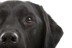 In huis waarschuwt de signaalhond mensen met een auditieve beperking voor geluiden als de deurbel, de telefoon, het kloppen op ramen of deuren of computergeluiden. Geluiden in de keuken, zoals het piepen van een magnetron, het afslaan van de waterkoker
