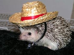 F this guy. He thinks he can walk around in a cowboy hat, bein cute as shit, and make me love him. He doesn't even need a cowboy hat. I mean what's he gonna do, round up some fleas? Lasso em in? This guy...