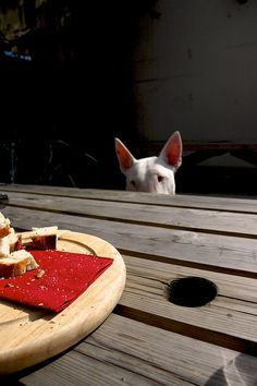 Promise: Im only watching. I dont want any bread, in fact I dont like bread....Im just watching! #English #Bullterrier