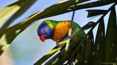 Quais os lugares do mundo onde a natureza é mais colorida? http://bbc.in/1Pnttzb