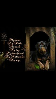 """Click visit site and Check out Best """"Rottweiler"""" T-shirts. This website is outstanding. Tip: You can search """"your name"""" or """"your favorite shirts"""" at search bar on the top."""