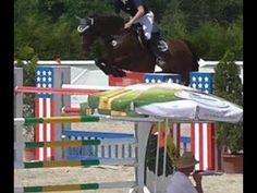 www.sporthorses-online.com 2006 Hanoverian jumper gelding 140 cm 16.2 hh