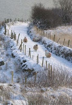 Killybegs, County Donegal, Ireland Look at the snow! I can't believe there is that much snow in Donegal! Winter Szenen, Winter Magic, Winter Time, Winter Walk, Winter Road, Winter Photos, Snow Scenes, Tier Fotos, Winter Beauty