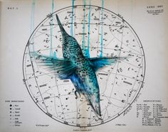Heavenly Bodies - Hummingbird 2 by Louise McNaught