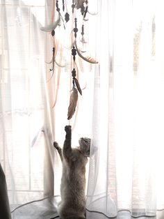 My cat Tenshi playing with the dream catcher. Dream Catcher, Curtains, Cats, Home Decor, Dreamcatchers, Blinds, Gatos, Decoration Home, Room Decor