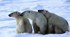 Help save the polar bear's home in the Arctic.
