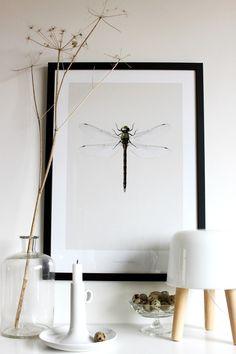 Insecten in huis. Nou moet ik zeggen dat grote spinnen mij altijd laten gillen (en niet van plezier) en dat kakkerlakken en naaktslakken ook niet onder mijn lievelingsdieren vallen.