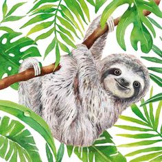 Watercolor Animals, Watercolor Paintings, Watercolour, Cute Sloth Pictures, Sloth Drawing, Paradise Pictures, Cute Baby Sloths, Drawing Lessons For Kids, Art Origami