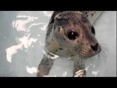 baby seal.  really?!