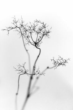 Botanic - Photography by Marlen Karema, TM